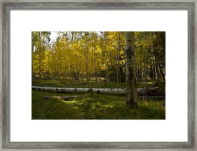 Framed Print featuring the photograph Aspens 4619 by Tom Kelly