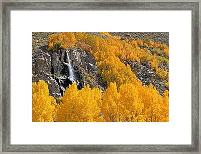 Aspens And A Waterfall Framed Print