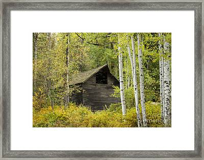 Aspens And Barn Framed Print