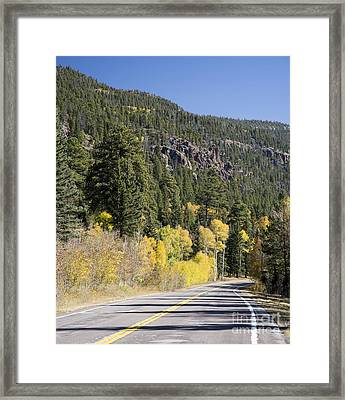Aspens And Firs Framed Print