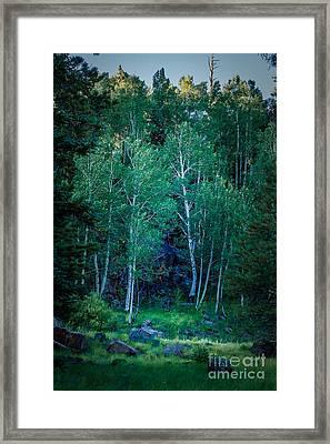 Aspens Framed Print by Arne Hansen