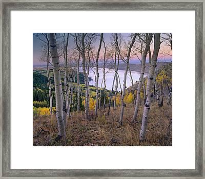 Aspens At Fremont Lake Bridger-teton Framed Print
