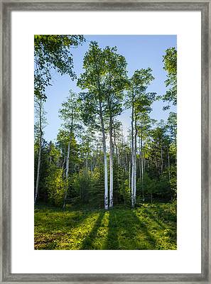 Aspens At Sunrise 1 - Santa Fe New Mexico Framed Print