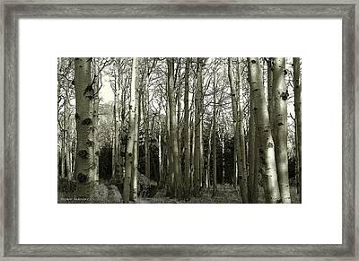 Aspens Black And White Framed Print