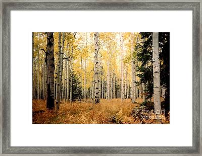 Framed Print featuring the photograph Aspens by Fred Wilson