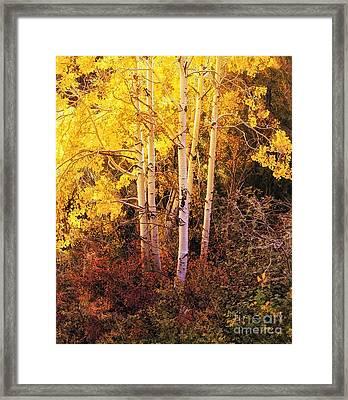 Aspens In Autumn Framed Print