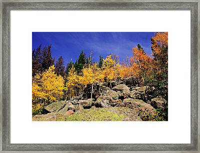 Aspens In Fall Framed Print
