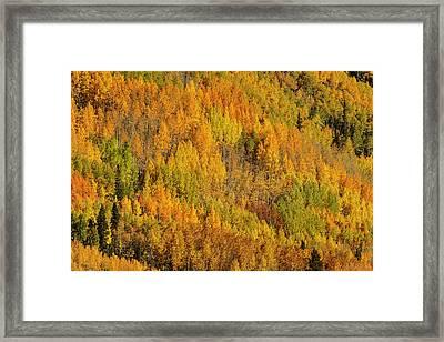 Aspens In Fall On Steep Mountain Slope Framed Print