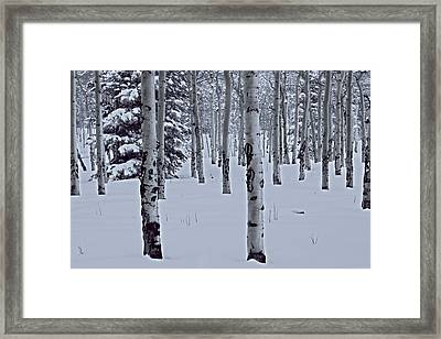 Framed Print featuring the photograph Aspens In The Snow by Kristal Kraft