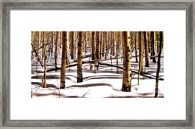 Aspens In Winter Framed Print by Claudette Bujold-Poirier
