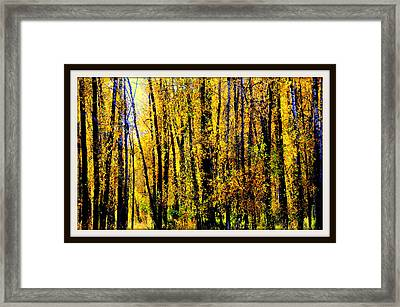 Aspens In Yellowstone National Park Framed Print by Aron Chervin