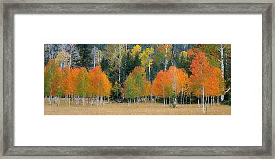 Aspens And Meadow-pan Framed Print