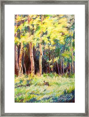 Aspens On The North Rim Framed Print by Katrina West