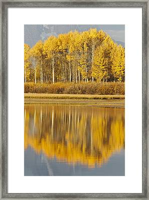 Aspens Reflected In A Pool In The Snake Framed Print