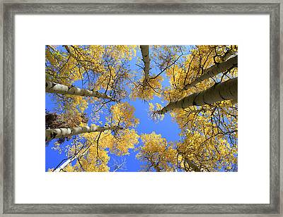 Aspens Skyward Framed Print