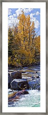 Aspens With Creek Framed Print by Kelley King