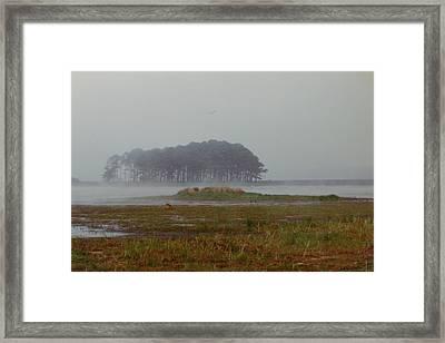 Assateague Fog Framed Print by Joann Renner