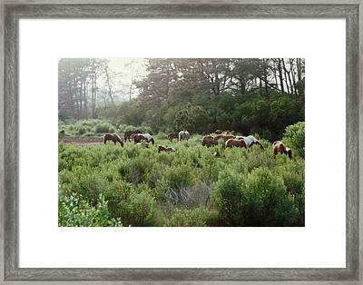 Assateague Herd Framed Print by Joann Renner