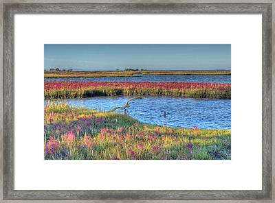 Asseteague Island Salt Marsh Framed Print