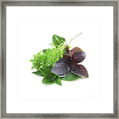 Assorted Basil Herbs Framed Print