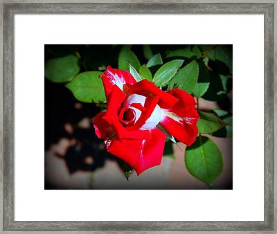 Assorted Flower 003 Framed Print