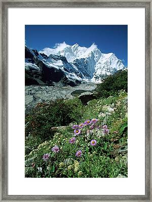 Aster Daisys At Mt. Chomolonzo Framed Print by Colin Monteath