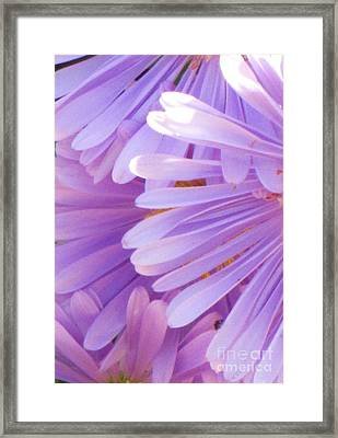 Framed Print featuring the photograph Aster Petals by Michele Penner