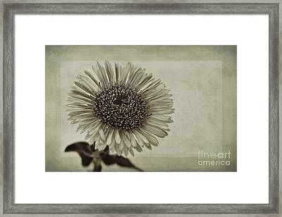Aster With Textures Framed Print by John Edwards