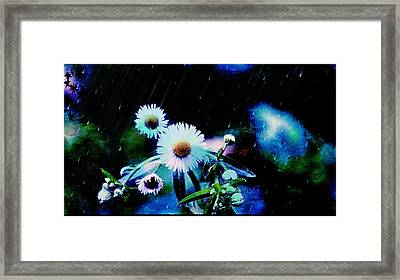 Asters Aglow Framed Print by Christina Shaskus