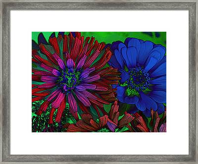 Asters Framed Print by David Pantuso
