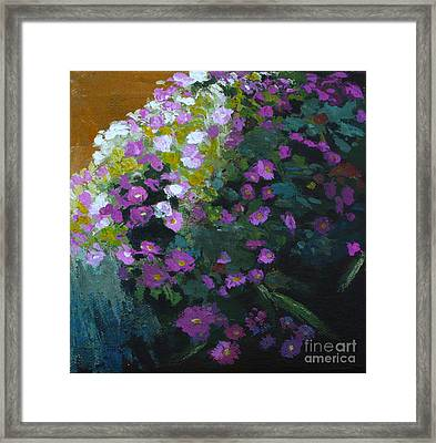 Asters Framed Print by Melody Cleary
