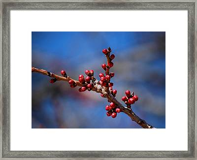 #asthedaysbecamelonger Framed Print by Becky Furgason