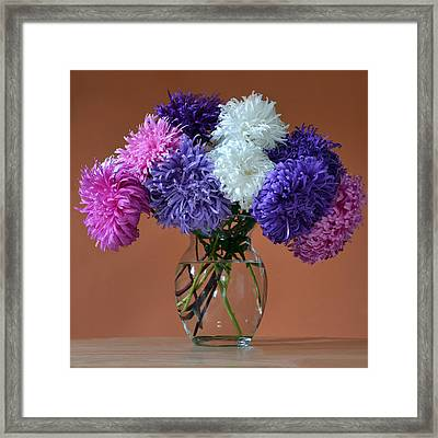 Astonishing Asters. Framed Print by Terence Davis