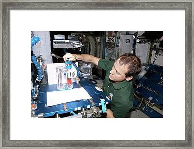 Astronaut Conducting Experiment On Iss Framed Print