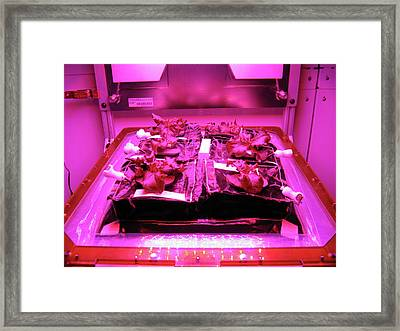 Astronaut Vegetable Production System Framed Print