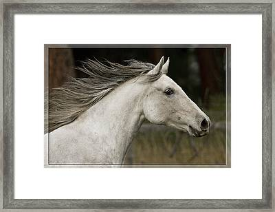At A Full Gallop Framed Print by Wes and Dotty Weber