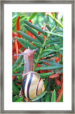 At A Snail's Pace Framed Print