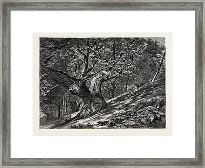 At Coney Hill, Hayes Common, Kent, Uk, Great Britain Framed Print by English School