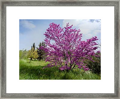 Framed Print featuring the photograph At Full Blossom by Uri Baruch