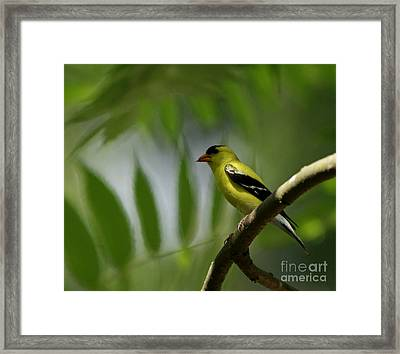 At Home In The Forest Framed Print by Inspired Nature Photography Fine Art Photography