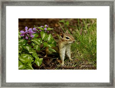 At Home In The Garden Framed Print by Inspired Nature Photography Fine Art Photography