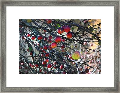 At One's Own Pace Framed Print by Cecile Brion