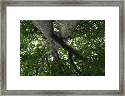 At Peace - World Under Me Framed Print