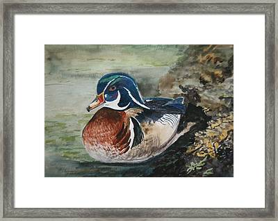 At Rest Framed Print by Betty-Anne McDonald