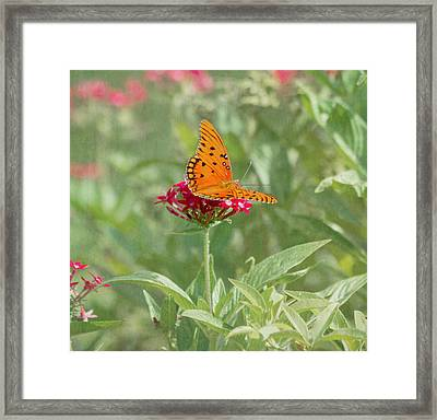 At Rest - Gulf Fritillary Butterfly Framed Print by Kim Hojnacki