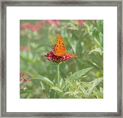 At Rest - Gulf Fritillary Butterfly Framed Print