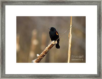 At Rest Framed Print by Mike  Dawson