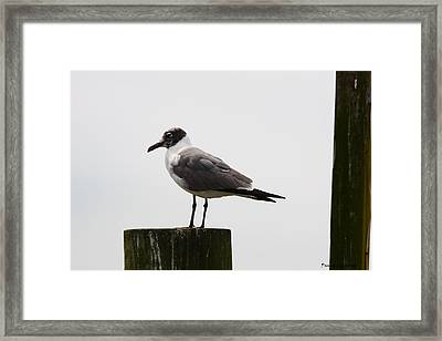 At Rest Framed Print by Paula Rountree Bischoff