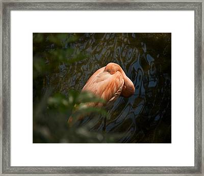 At Rest Wil 312 Framed Print