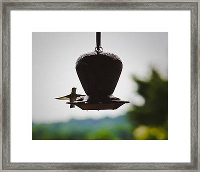 Framed Print featuring the photograph At The Feeder by Debra Crank